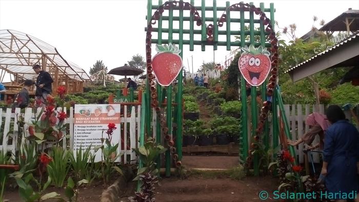 Bukit Kebun Wisata Strawberry Malang Indonesia www.SelametHariadi.com