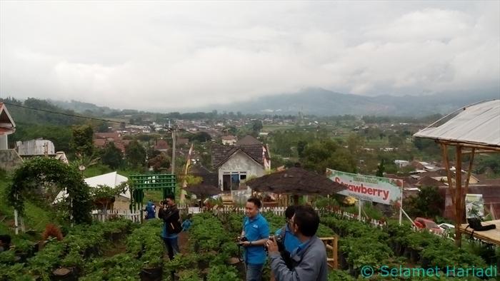 Bukit Kebun Wisata Strawberry Malang Indonesia www.SelametHariadi.com (4)