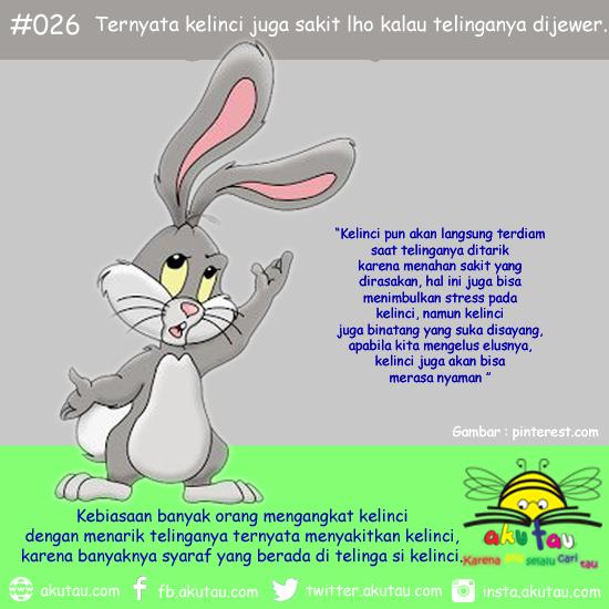 Foto Rabbit Field Taman Kelinci Destinasi Wisata Malang www.SelametHariadi.com