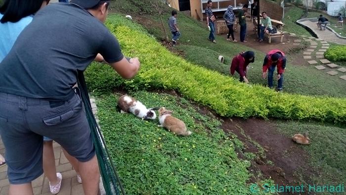 Rabbit Field Taman Kelinci Destinasi Wisata Malang www.SelametHariadi.com (8)